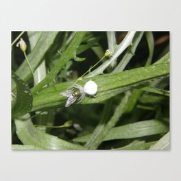 Kiss Me Said The Spider To The Fly Canvas Print
