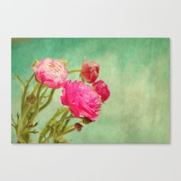 Ranunculus in Spring Canvas Print