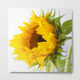 sunflower, girassol Metal Print