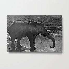 Elephant At A Waterhole Metal Print
