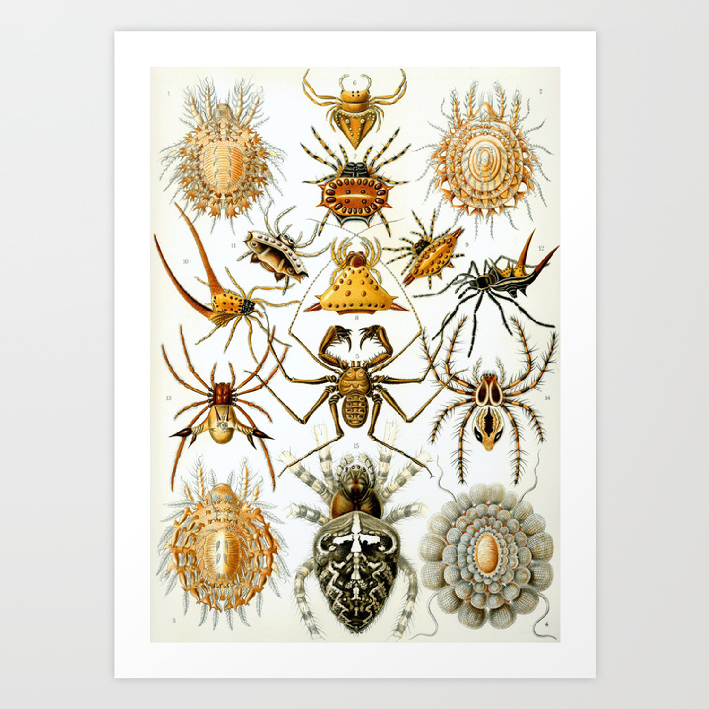 Ernst Haeckel Kunstformen Der Natur Arachnida Plate Spiders Art Print By Naturamorta Society6