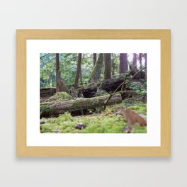 Kalaloch Forest Framed Art Print