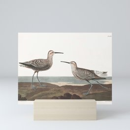 Long-legged Sandpiper by John Audubon Mini Art Print