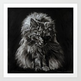 Main Coon Cat Comes For Dinner Art Print