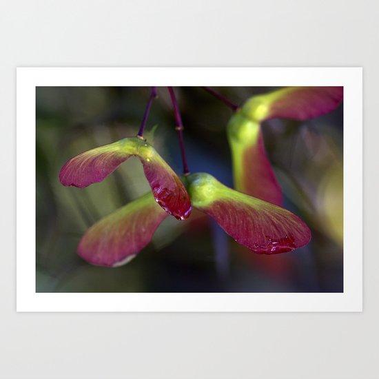 Japanese Maple Seeds IV Art Print