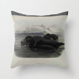 324 Oidemia nigra. Scoter Throw Pillow