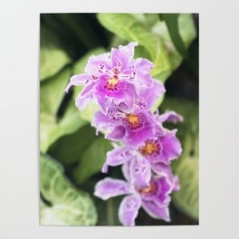 Longwood Gardens Orchid Extravaganza 61 Poster