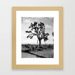 Joshua Tree, Mojave Desert 1904 Framed Art Print