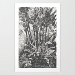 Palms in Water Art Print