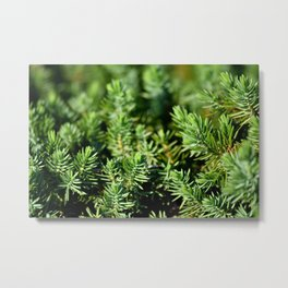 Juniper Shrub Metal Print