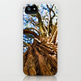 Looking Up A Tree iPhone Case