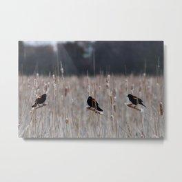 Blackbirds Singing Metal Print