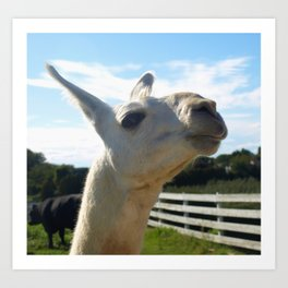 The White Llama Art Print