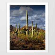 Saguaro National Park near Tucson Arizona Art Print