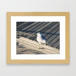 Seagull on wooden boardwalk Framed Art Print
