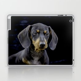 Black and Tan Dachshund Puppy Looking off into the Distance on a Black Background Laptop & iPad Skin
