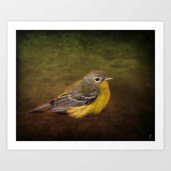 Baby Warbler Art Print