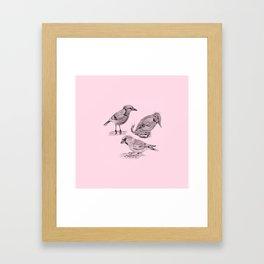 Candy Birds  2 Framed Art Print
