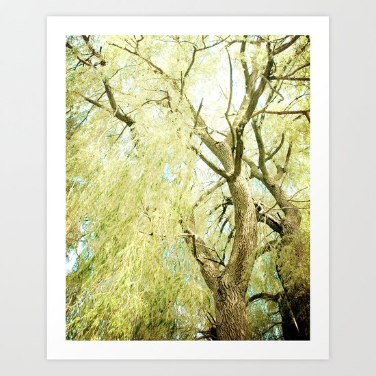 Willow Tree Art Print