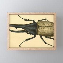 Vintage Print - Bullock's London Museum & Pantherion (1812) - Hercules Beetle Framed Mini Art Print