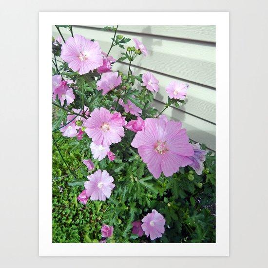 Pink Musk Mallow Bush in Bloom Art Print