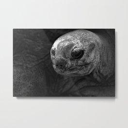 Aldabra Giant Tortoise Metal Print