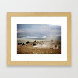 WHERE THE BUFFALO ROAM Framed Art Print