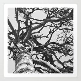 Pinewood Art Print