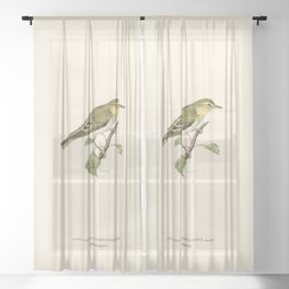 Wood Warbler (Phylloscopus sibilatrix) illustrated by the von Wright brothers Sheer Curtain