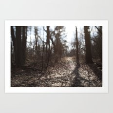 Afternon Light Art Print