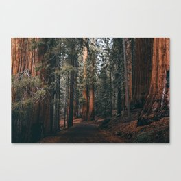 Walking Sequoia Canvas Print
