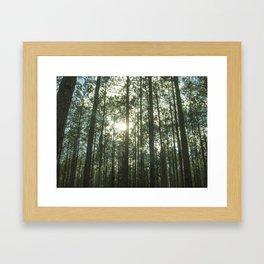 Endless Forest  Framed Art Print