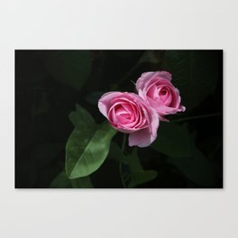 Pink and Dark Green Roses on Black Canvas Print