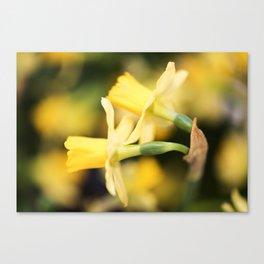 Tête-à-Tête Daffodil - Head to Head Canvas Print