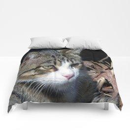 Bird Watching Comforters