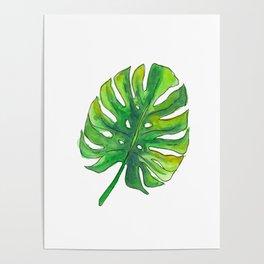 Monstera leaf Poster