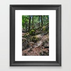 Forest and Webs Framed Art Print