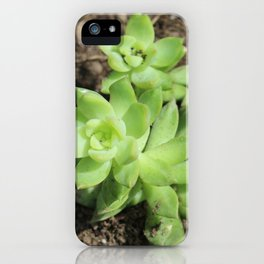 Succulents at The Sky Garden, 20 Fenchurch Street, London iPhone Case
