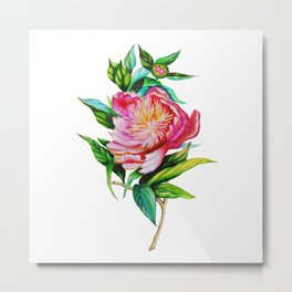 bright red pink peony Metal Print