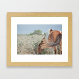 wild horse, assateague Framed Art Print