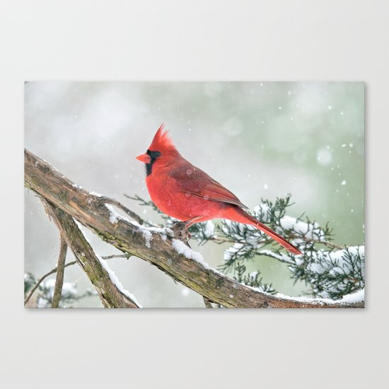Cardinal Holding Steady in the Storm Canvas Print