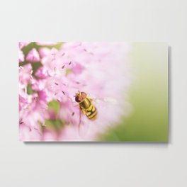 Hoverfly on Allium - Onion Flower 7 Metal Print