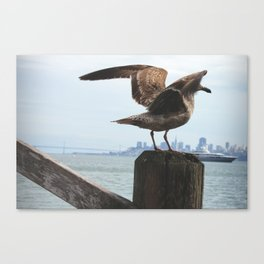 Feathers in the Bay Canvas Print