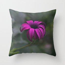 Has been a long day (African Daisy Flower) Throw Pillow