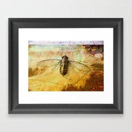 Life Cycle of a Cicada Framed Art Print