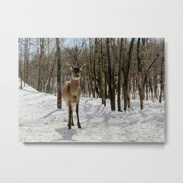 oh deer (full frame) Metal Print