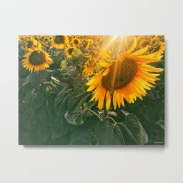 summer in the fields Metal Print
