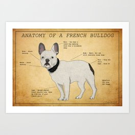 Anatomy of a French Bulldog Art Print