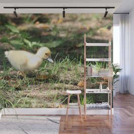 Baby Duckling strolling on a lawn Wall Mural