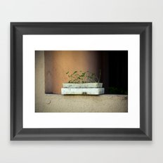 Seedlings Framed Art Print